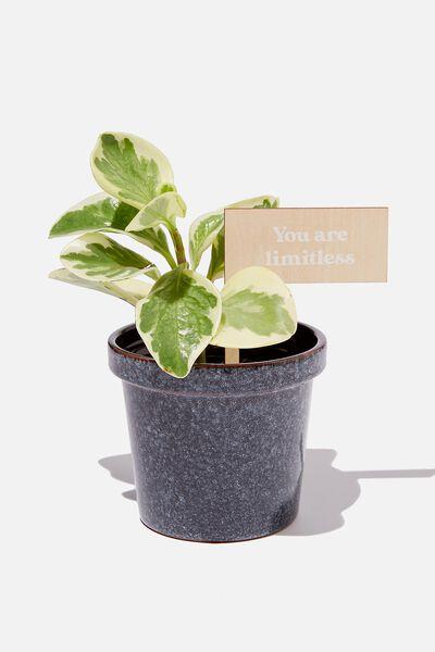 Message Pot Planter, GRADIENT