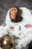CHIMP ASTRONAUT