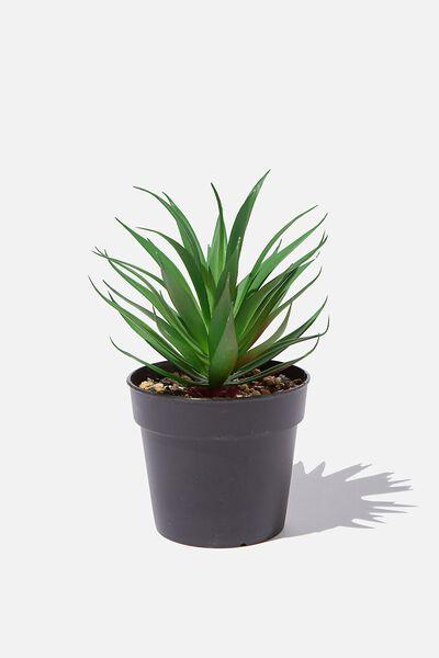 Small Plant, SUCCULENT
